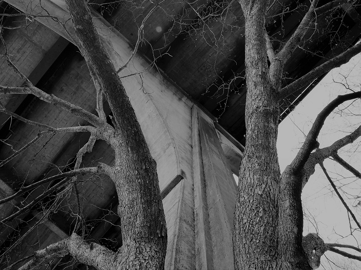 B&W photo of concrete bridge support flanked by tree trunks.