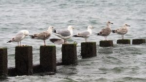 Gulls sitting on Aberdeen breakwater