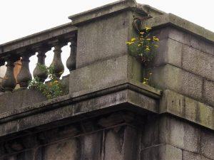 Weeds growing in building eaves