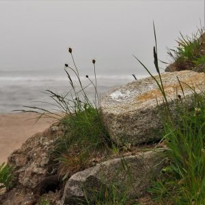 Rocky shoreline in fog.