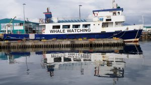 Blue and white whale-watching boat and reflection in Reykjavik.