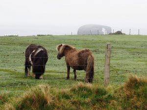 Shetland ponies in the foreground; Dore Holm in the background
