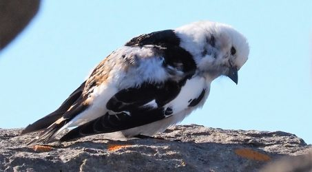 Birds, Iceland