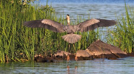 Birdies, White Lake ON