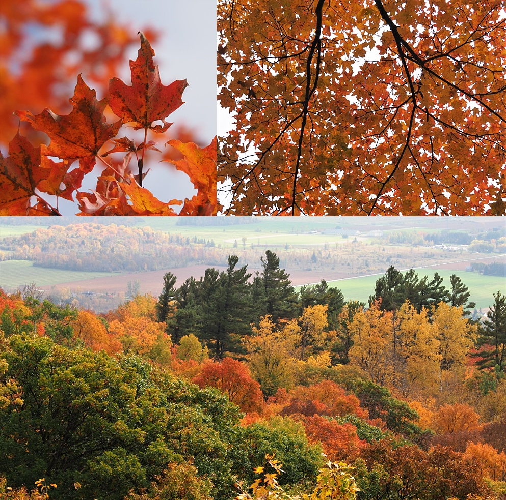 3-photo collage of Gatineau Park in autumn colours