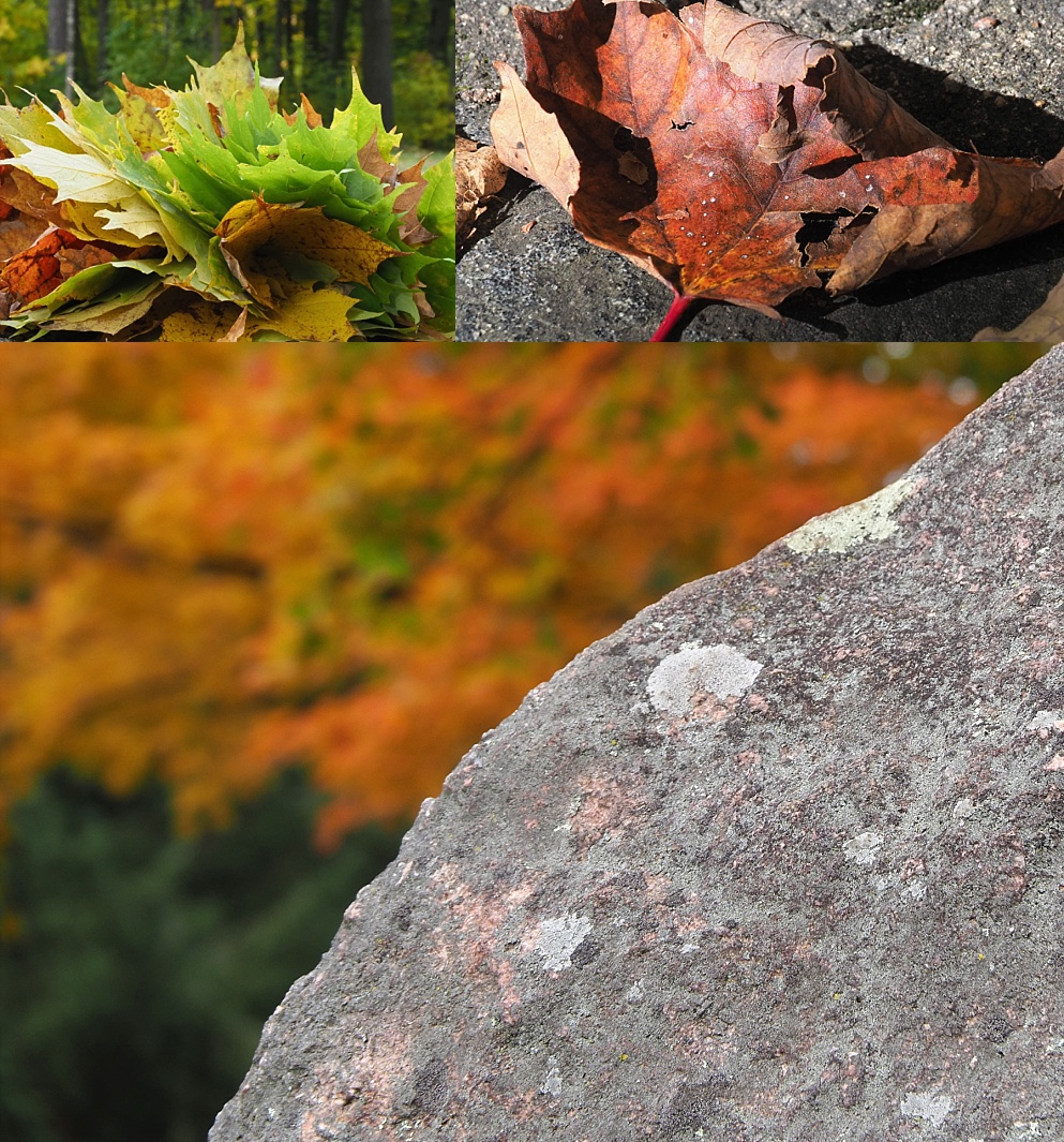 3-photo collage of fall colours in Gatineau Park