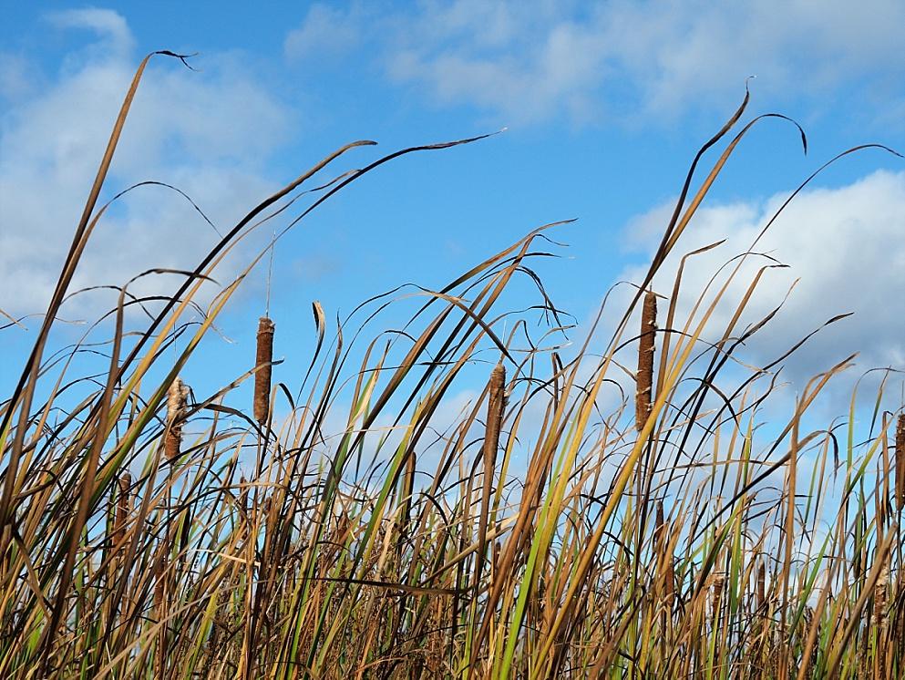 Marsh grasses in autumn colours