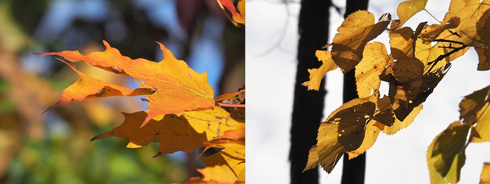 2-photo collage of autumn leaves