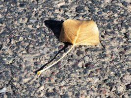 Dry leaf on walking path