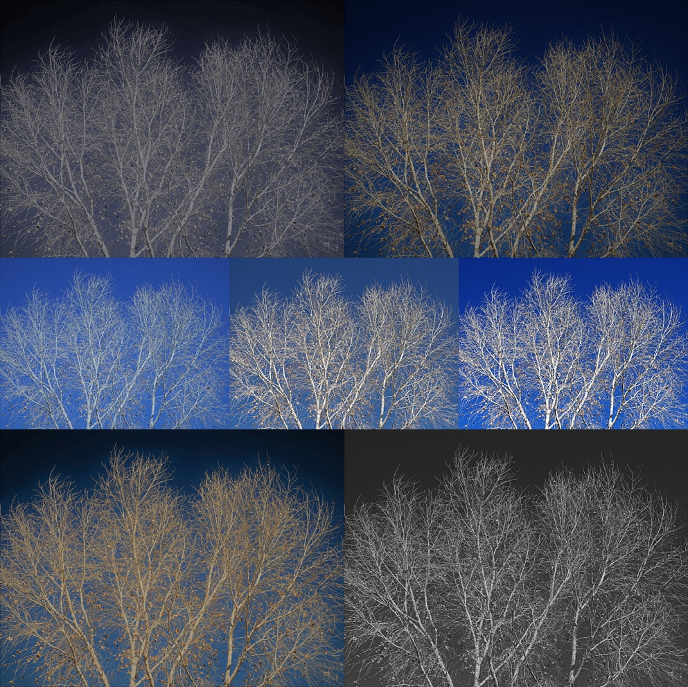 Collage of cottonwood photo, with 7 filters