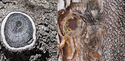 Tree Trunks, Gilbert AZ