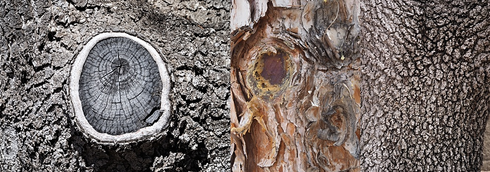 3-photo collage of different tree-trunk textures