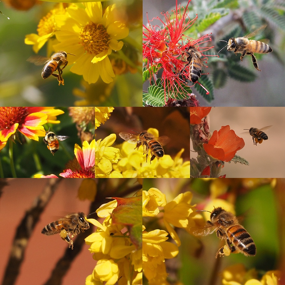 7-photo collage of airborne bees
