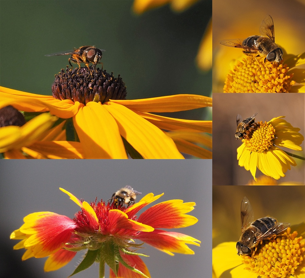 5-photo collage of front view of bees