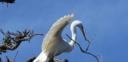 White Birds, St. Augustine FL