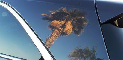 Palm Trees, El Paso