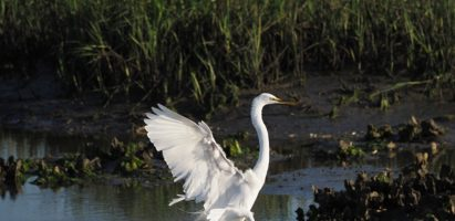 Birds, Huntington Beach State Park