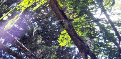 Salt Spring Vistas – Part 3