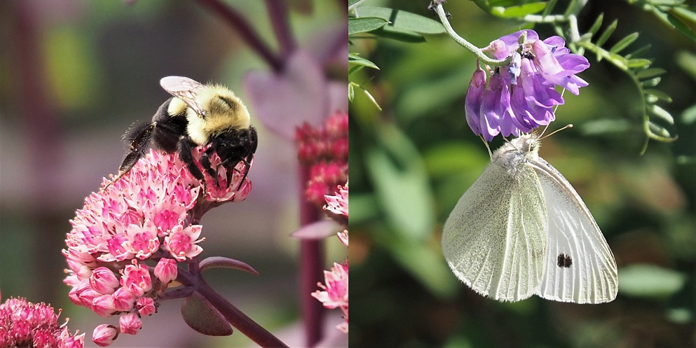 Bee and moth