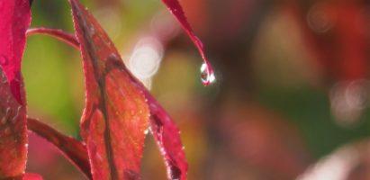Rainshine