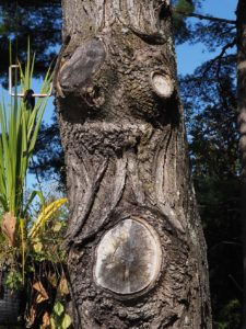 Tree-trunk face