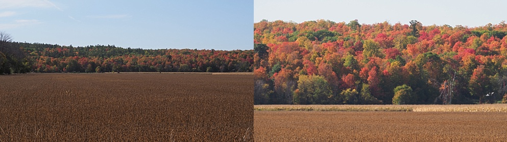 2-photo collage of fall leaves across a harvested field