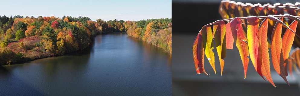 2-photo collage of fall leaves along the Rideau River