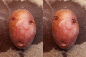 2-photo collage of potato face