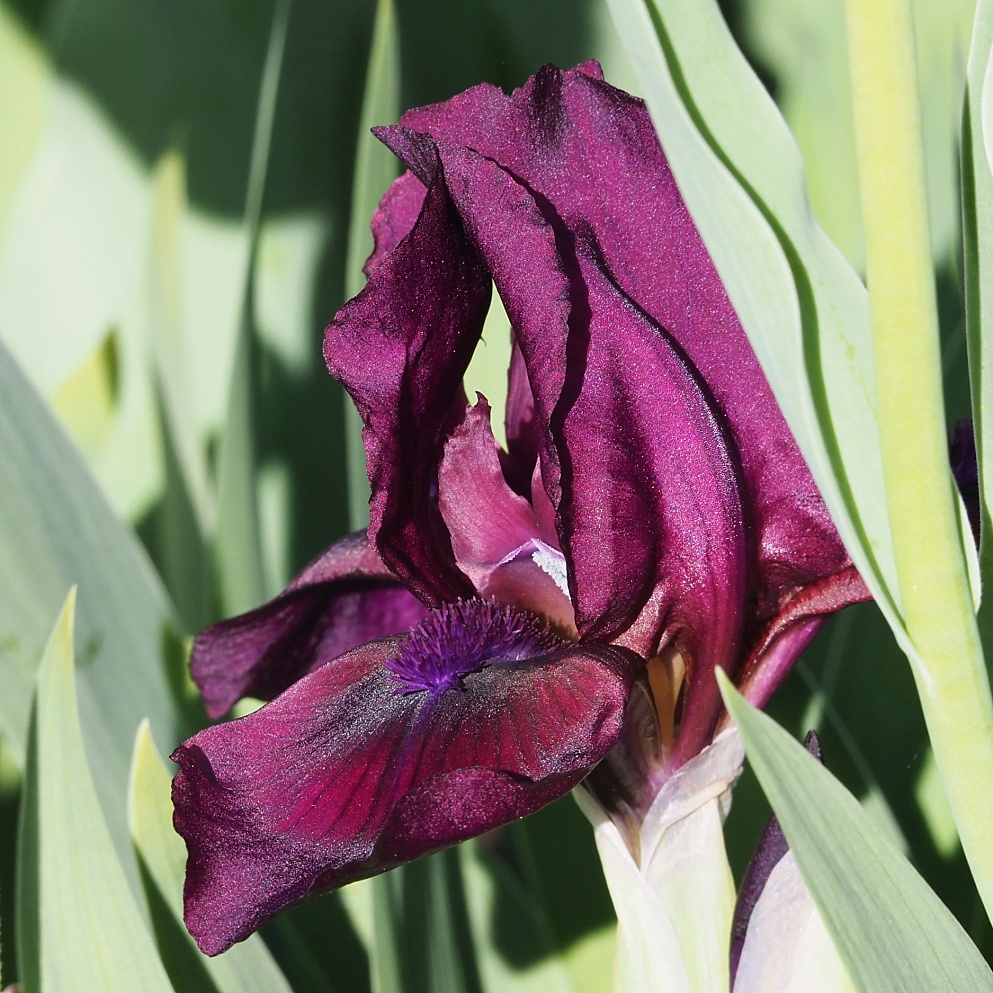 Partially open iris