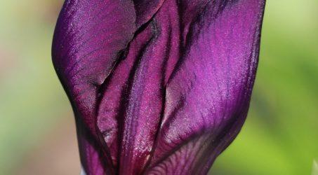 The Irritating Iris