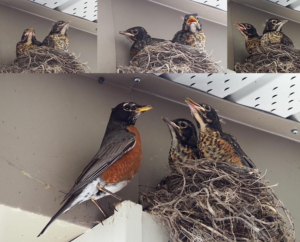 Robins - Jun 19 AM collage