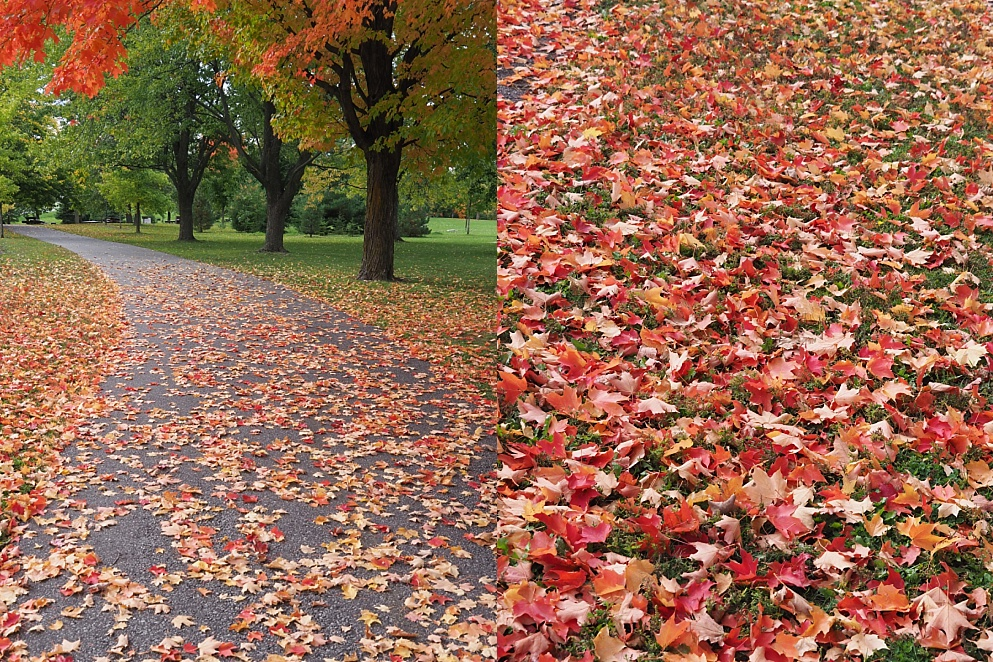 2-photo collage showing extent of leaf-fall