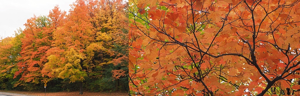 2-photo collage of fall leaves