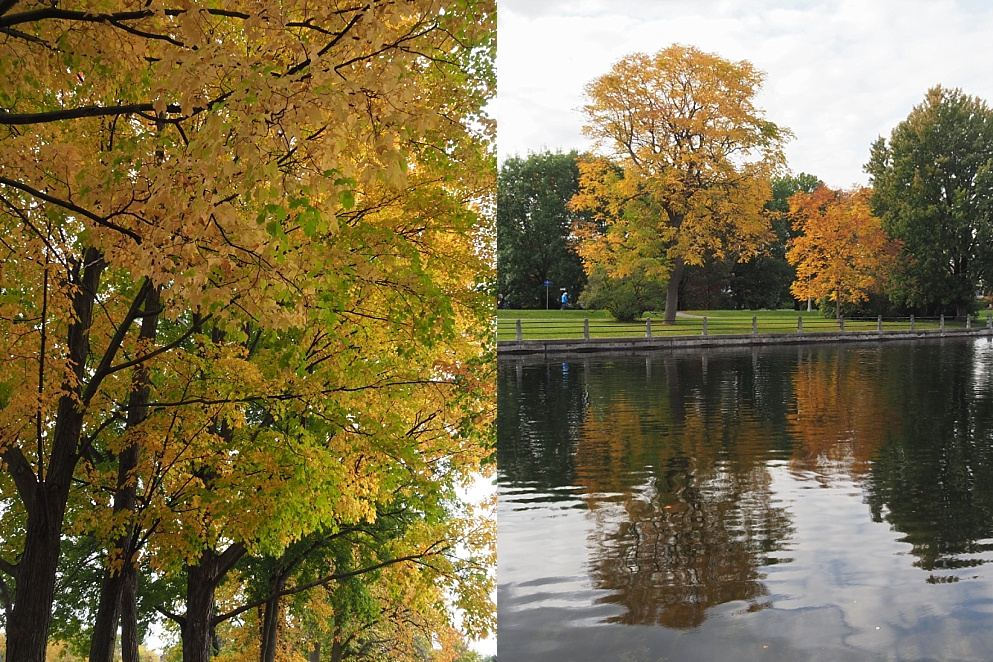 2-photo collage of yellow fall leaves