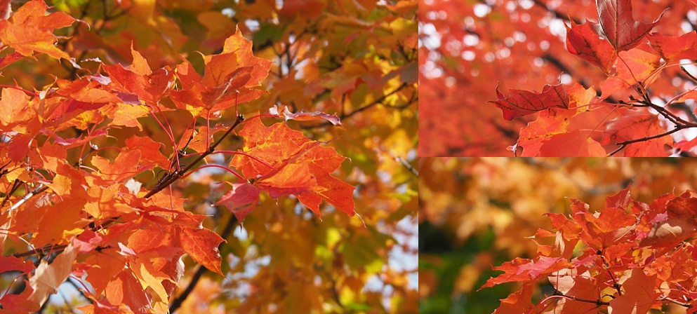 3-photo collage of fall leaves