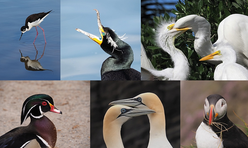 6-photo collage of extraordinary birds