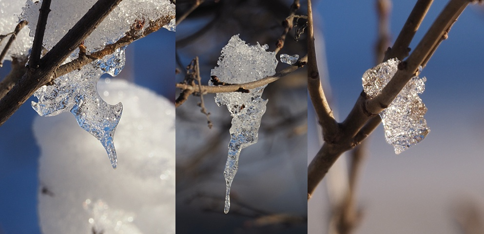 3-photo collage of tiny icicles on a shrub